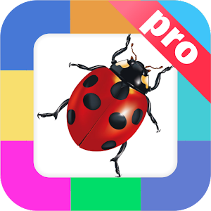 Download Flashcards Insects for kids. For PC Windows and Mac