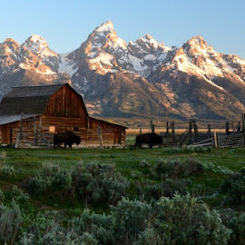 Barn in the Tetons by Janet Jordan - Novices Only Landscapes ( mountains, barn, bison, landscape, tetons )