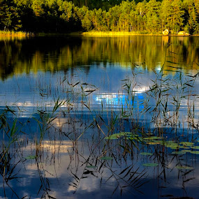 Moose Lake by Alf Winnaess - Uncategorized All Uncategorized