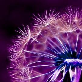 Dandelion by Nathalie Duhaime - Digital Art Things ( creation, quebec, canada, creative, purple, dandelion, flora, digital art, fractal, fractal processing, floral, flower,  )