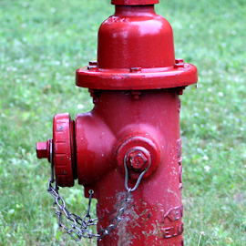 Got Water? by Jennifer Duffany - Artistic Objects Other Objects ( fireextinguisher gotwater water firehydrant hydrant )