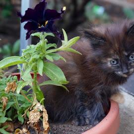 A new kind of flower. Kitten by Lynn Andrasko - Animals - Cats Kittens