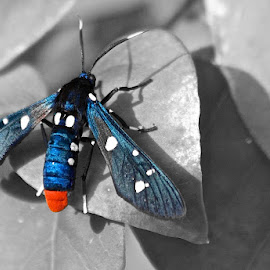 Polka Dots by Tracey Goodwin - Animals Insects & Spiders ( b&w, nature, bugs, black and white, color splash, photo stream )