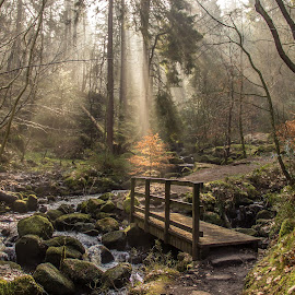 Magical by Mike Briggs - Uncategorized All Uncategorized ( stream, magical, forest, bridge,  )