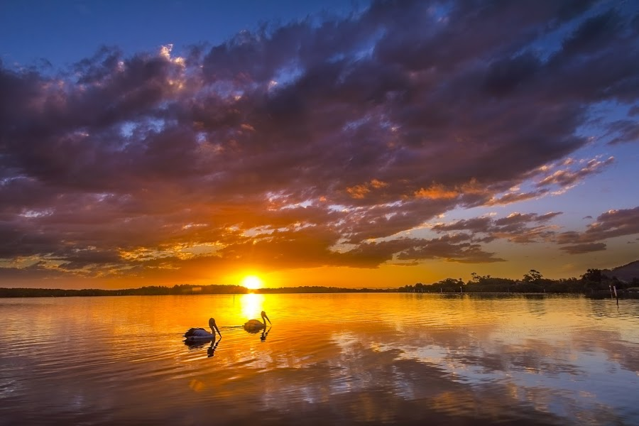 Last Light on the River by Andy Hutchinson - Landscapes Sunsets & Sunrises ( sunset, australia, pelicans, nsw, river )
