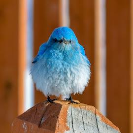 by Steve Wieseler - Animals Birds ( serenity, blue, mood, factory, charity, autism, light, awareness, lighting, bulbs, LIUB, april 2nd )