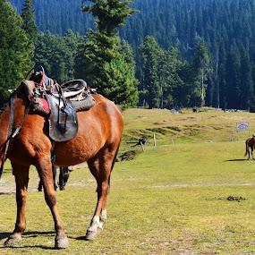 Wanderer by Dibyendu Banik - Novices Only Wildlife ( heaven, lush, wanderer, horse, landscape )