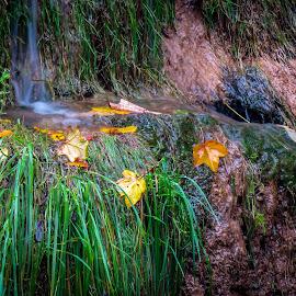 by Jasenka LV - Nature Up Close Leaves & Grasses
