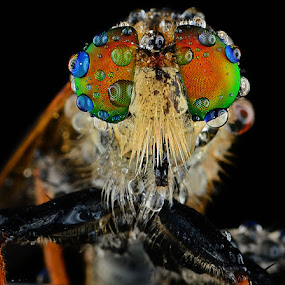 by Woe Hendrik husin - Animals Insects & Spiders