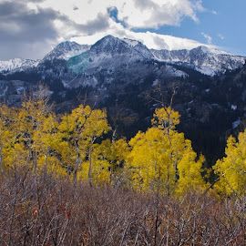 Autumn Dusting by Ramsey Samara - Landscapes Mountains & Hills ( big cottonwood canyon, millicent, brighton, autumn, wasatch )
