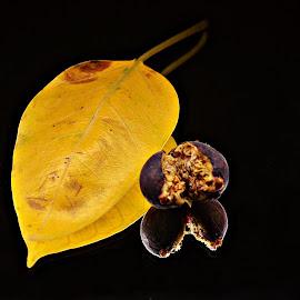 Ode to Autumn by Prasanta Das - Nature Up Close Other plants ( symbol, autumn, fallen, leaf, yellow, ripe fruit )