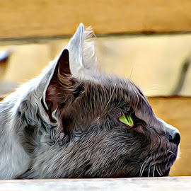 Black Cat by Irina Aspinall - Digital Art Animals ( cat, green eyes, portrait, black cat )