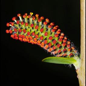 macica by Mrak Rado- Fotograf - Flowers Flowers in the Wild ( mini macro flowers, macica, up, close )