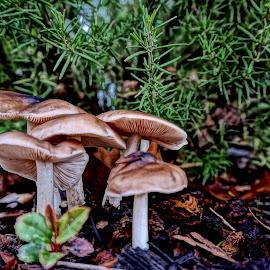 Fungi Family by Barbara Brock - Nature Up Close Mushrooms & Fungi ( fungi, wild mushrooms, fungus, mushrooms )