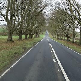 Beech avenue  by Chaz Clark - Landscapes Travel ( uk, beech trees, landscape photography, trees, roadside, road, kingston lacy, dorset )
