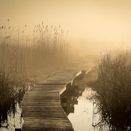Into the Fog by Ron DiLaurenzio - Landscapes Waterscapes ( haze, fog, silhouettes, golden, swamp, boardwalk, mist, relax, tranquil, relaxing, tranquility )