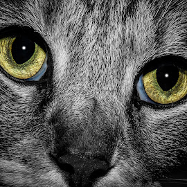In a Cats Eye by Doug Long - Animals - Cats Portraits ( looking, cat, green, tom cat, fur, feline, close up, eye )