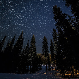 Full of Stars by James Wheeler - Landscapes Starscapes ( nobody, silhouette, beauty, travel, frozen, landscape, hiking, fir, sky, cold, nature, tree, snow, dark, dramatic, pristine, light, darkness, black, manning park, british columbia, park, canada, majestic, twilight, beautiful, star, white, snowy, forest, dusk, astronomy, wilderness, winter, season, blue, stars, outdoor, night, outside, hike, hope, starry )