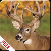 Deer Hunting Calls APK for iPhone