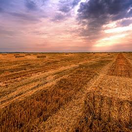 Beautiful fields of Serbia by Ranko Krneta - Landscapes Prairies, Meadows & Fields ( wheat, clouds, orange, grass, travel, landscape, sun, corn, field, distance, sky, bales of hay, nature, ranko, sunset, krneta, serbia, d7100, summer, summertime, nikon, light, fields )