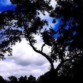 Under Oregon Skies by Lynn Frost - Novices Only Flowers & Plants ( sky, oaks, trees, landscape, nightscape )
