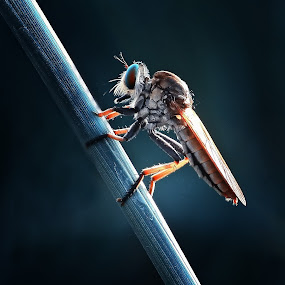 by Ribut Bagus - Animals Insects & Spiders
