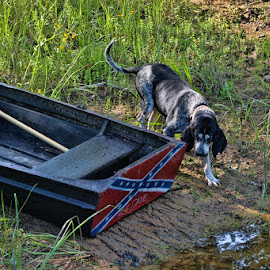 Miss Molly by Deborah Russenberger - Animals - Dogs Portraits ( bluetick coonhound, boat )