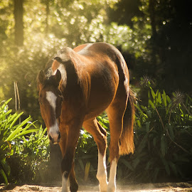 A morning stroll by Cheryl Hesketh - Animals Horses ( equine, horses, bay, horse, thoroughbred )