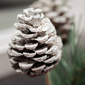 Christmas Cone by Helen Andrews - Artistic Objects Still Life