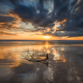 Driftwood by Graham Kidd - Landscapes Sunsets & Sunrises ( clouds, water, sunset, seascape )