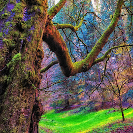 Trippy Tree by Dani Ammel - Digital Art Things ( abstract, psychedlia, outdoors, trippy, rainbow )
