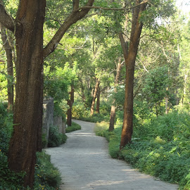 Nature Walk! by Shikha Jain - Nature Up Close Gardens & Produce ( nature, nature walk, lush, path, trees )