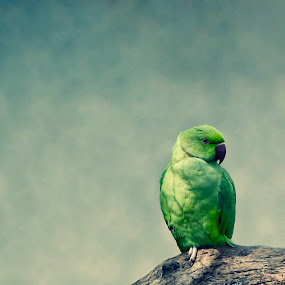 Emo, the parrot by Delia Galhotra - Animals Birds ( bird, animals, digiphotography, nature, green, parrot, feathers )
