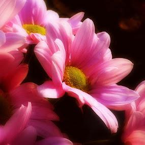 Natures Beauty by Michelle Dimascio - Flowers Flower Arangements ( nature, plants, flowers )