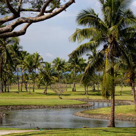 Tropical golf course by Vibeke Friis - Sports & Fitness Golf ( golf course, fiji, denerau )