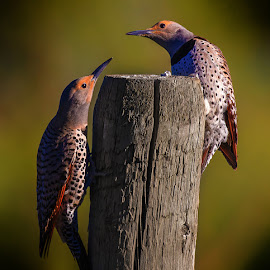 by James Harrison - Animals Birds