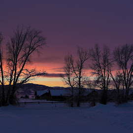 Pastel Sunset by Chad Roberts - Landscapes Sunsets & Sunrises ( pastel, winter, silhouette, sunset, snow, trees,  )