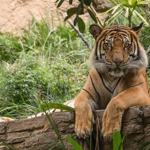 zoo_0001.jpg