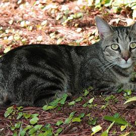 Watching Birds by Debra Branigan - Animals - Cats Playing ( cats, reclining, animals, bird-watching, photography,  )