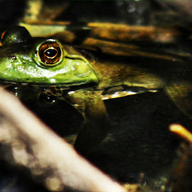 frog eyeball reflection by Rita Flohr - Novices Only Wildlife ( water, nature, frog, green, wildlife )
