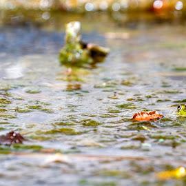 by Kishu Keshu - Animals Amphibians