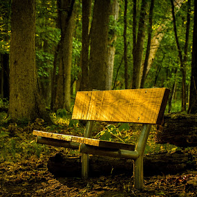 Bench at Kensington Metropark by Chris Mowers - Landscapes Forests ( bench, kensington, yellow, woods, evening,  )