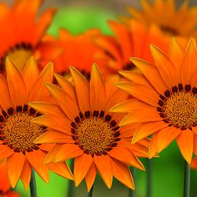 by Rajib Kumar Bhattacharya - Nature Up Close Flowers - 2011-2013