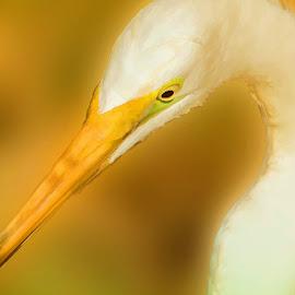 Portrait In Yellow by Sheen Deis - Digital Art Animals ( white birds, yellow, birds, large birds, egrets )