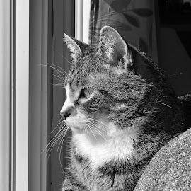 Enjoying some winter sunshine  by Tom Merring - Animals - Cats Portraits ( cat )