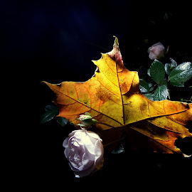 *** by Jurijs Ratanins - Instagram & Mobile Android ( mobilography, nature, autumn, roses, plants, leaves, flowers )