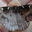 Paradirphia moth