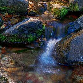 Alder Creek 2 by Danny Bruza - Nature Up Close Water ( alder creek, alpine village, water )