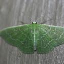 Southern Emerald