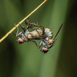 by Lidy Kerr - Animals Insects & Spiders